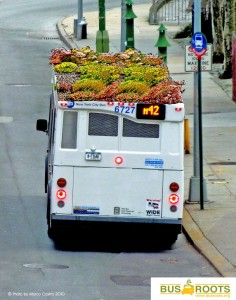 Bus-Roots-1-808x1024